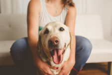 wentzville vet marketing